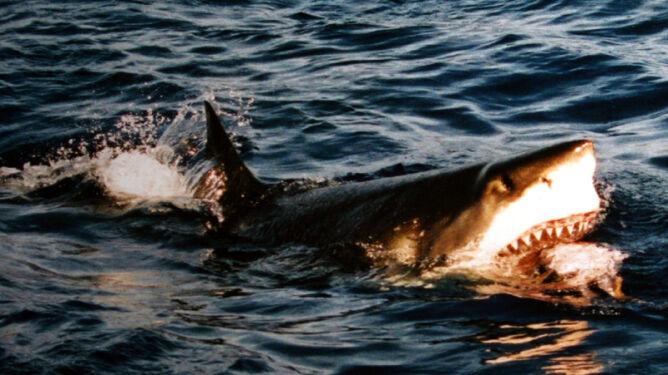 Rekin zabił go podczas miodowego miesiąca