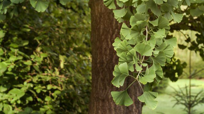 """40 procentom gatunków roślin grozi wyginięcie. """"Przegrywamy walkę z czasem"""""""