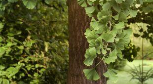 """40 procent gatunków roślin może wyginąć (""""Polska i Świat"""" TVN24)"""