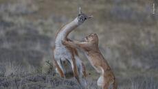 © Ingo Arndt - Wildlife Photographer of the Year