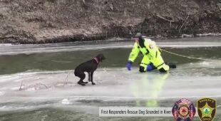 Strażacy uratowali psa, który utknął na tafli lodu na rzece